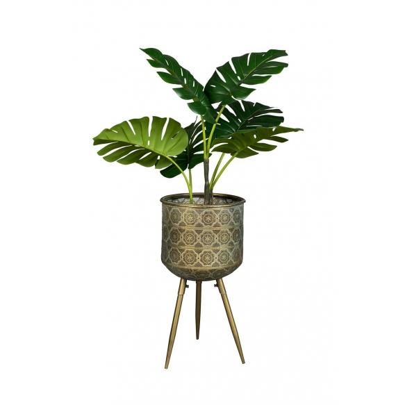 jalusta Botanique L
