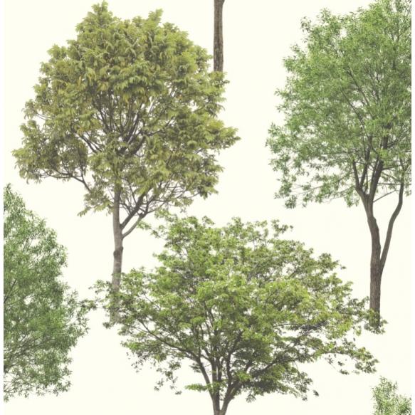 tapetti Woodland Trees
